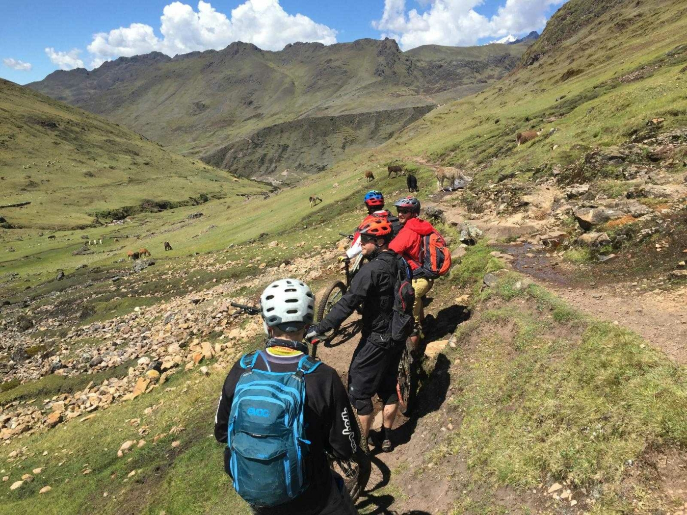 4 people walking their mountain bikes on a narrow rocky mountain path surrounded by grassy hills and alpacas dotting the hillside