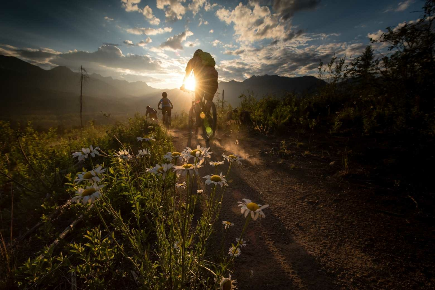 Three Mountain Bikers riding off into the sunset on dirt path with wildflowers at forefront of image